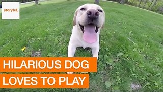 Dog Demonstrates How to Take Joy From Life's Simple Pleasures - Video