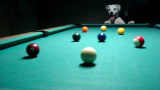 Talented Dog Reveals Impressive Billiards Trick Shots - Video