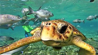 Friendly loggerhead sea turtle approaches swimmer in marine sanctuary