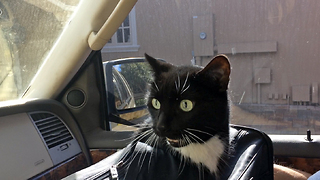 Cat loudly complains about going for a car ride