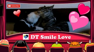 Unconditional love - Two kittens kissing - cute - Video