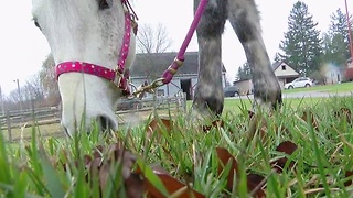 Neglected horse will give birth soon and the shelter that saved her is asking for your help - Video