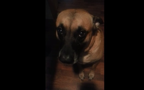 Guilty dog refuses to make eye contact after eating lip balm