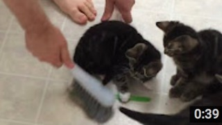 Cleaning With Kittens  - Video
