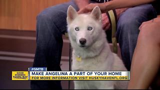Rescues in Action: Make Angelina a part of your family