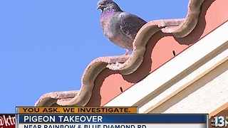 Neighbors say pigeons are taking over southwest Las Vegas neighborhood - Video