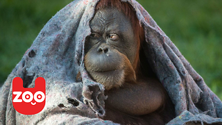 Rio Animals Wrap Up Warm - Video
