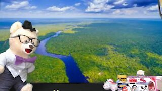 Learn about Rainforests with Chumsky Bear   Earth Science   Educational Videos for Kids