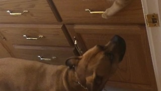 Caring Cat Shares Food With Family Dogs - Video