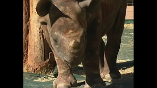 Rhino Orphanage - Video