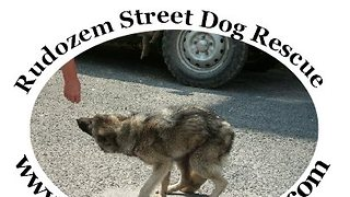 RSDR Rudozem Street Dog Street - How It All Began...