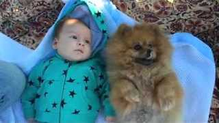 Baby Meets Pomeranian in Cuteness Overload - Video