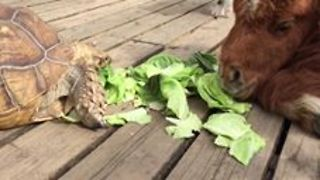 Little Pony, Turtle And A Puppy Are Having A Healthy Lunch - Video