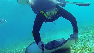 Stingray glides over swimmer's head in Belize - Video