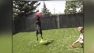 """Dog Enjoys Playing Fetch with Lawn Sprinkler!"""