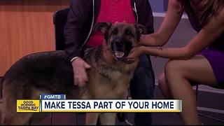 Rescues in Action: Tessa maybe perfect permanent match - Video