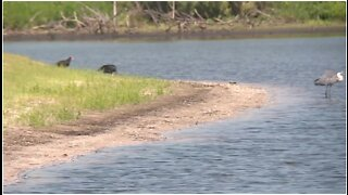 Major water quality projects around Lake Okeechobee still on track