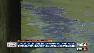 Gov. declares State of Emergency as algae expands - Video