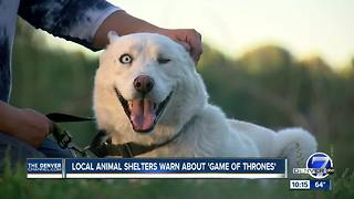 Colorado 'Game of Thrones' fans abandon Huskies and Malamutes - Video