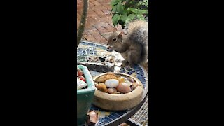 Meet Lush, she is a hungry squirrel.