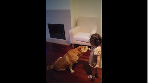 Baby girl hand feeds Shar Pei from food bowl