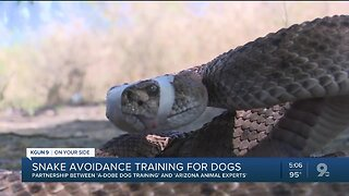 Snake avoidance training for dogs could save lives