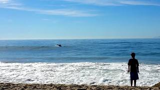 Wild dolphins casually swim alongside beach goers - Video