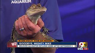 Goodbye, Mighty Mike - Video
