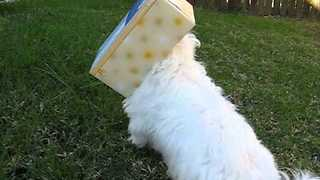 Puppy Gets His Head Stuck in Tissue Box