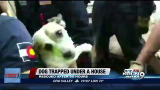 Dog rescued after being trapped under home for 30 hours - Video