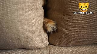 Cat humorously sticks paw through couch pillows - Video