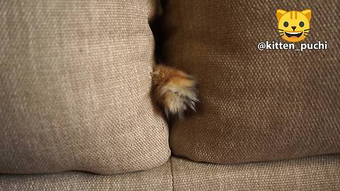 Cat humorously sticks paw through couch pillows