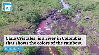 Caño Cristales is the Most Colorful River in the World - Video