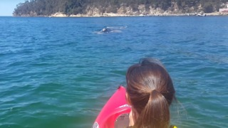 Kayakers Approached by Southern Right Whale at Hobart Beach - Video
