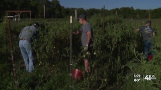 After the Harvest brings fresh produce to KC family tables