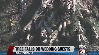 Tree falls on wedding party - Video