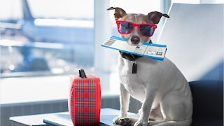 Airlines Tighten Rules Surrounding Emotional Support Animals