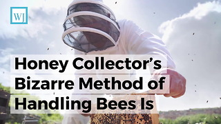 Honey Collector's Bizarre Method of Handling Bees Is Most Unsettling Thing You'll See in Weeks - Video