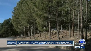 Community concerned about tree removal - Video