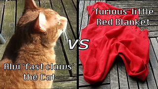 Cat reveals wild side with heated blanket battle - Video