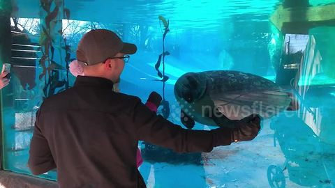 Curious seal keeps chasing a man's hand
