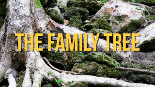The Family Tree - Video