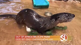 Out of Africa Wildlife Park: Meet Totter the Otter!