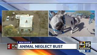 MCSO investigating alleged animal neglect at New River ranch - Video
