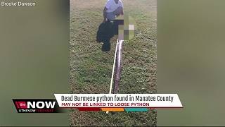 9-foot Burmese python found in Manatee County - Video