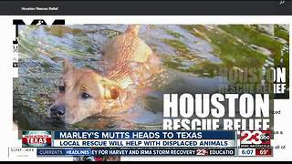 Marley's Mutts heads to Texas - Video