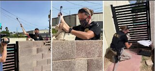 Animal Control saves kitten from cinder block wall