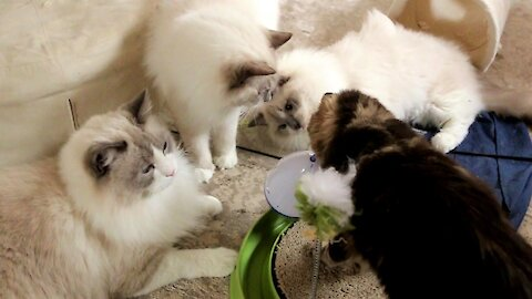 An ordinary day with 5 Cats