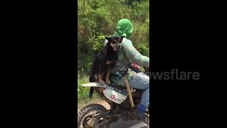 Adorable Dog And Owner Have Motorcycle Adventures Together  - Video