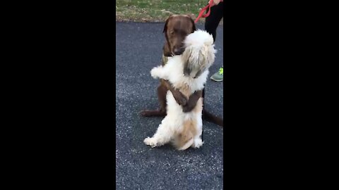 Watch these two doggies actually hug one another